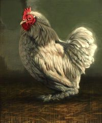 Grey cockerel