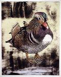 Eider Duck AP (2)