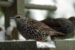 Starling 1 email