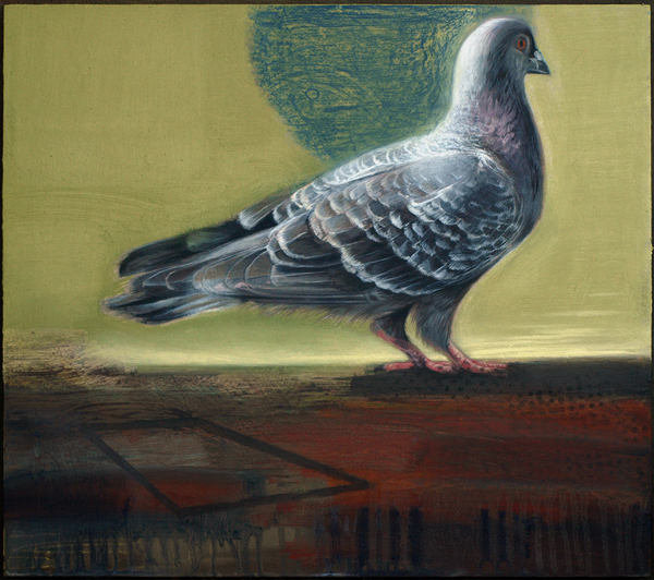 Pigeon Study email