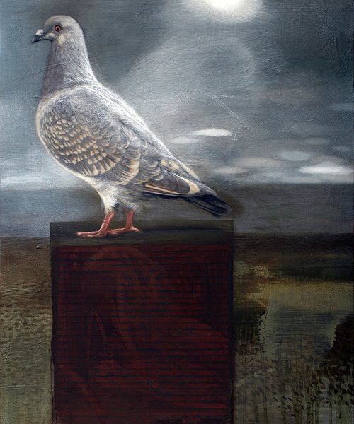 Pigeon Lookout email