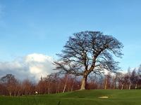 Golf_course_1_2