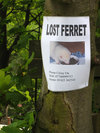 Lostferret